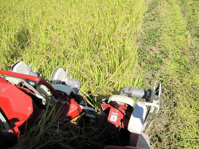 稲刈り風景4